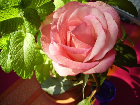 あのひとに似た薔薇